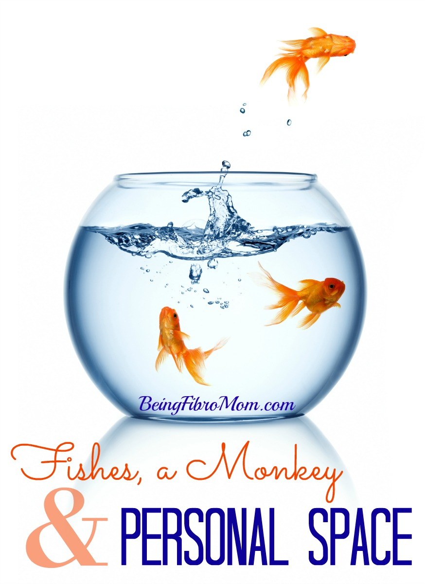 Fishes, a Monkey, & Personal Space #fishes #monkey #personalspace